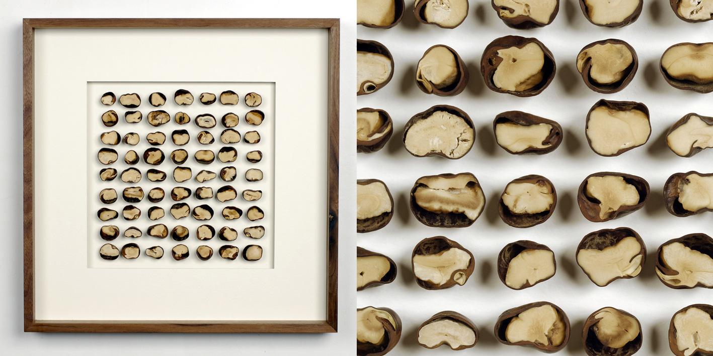 CHESTNUT HALVES, Castanea half (series: Second Glance), from halved chestnut, polished and waxed walnut frame, 45 x 45 cm, 2012, photo: Ignatz Deckard, 900€